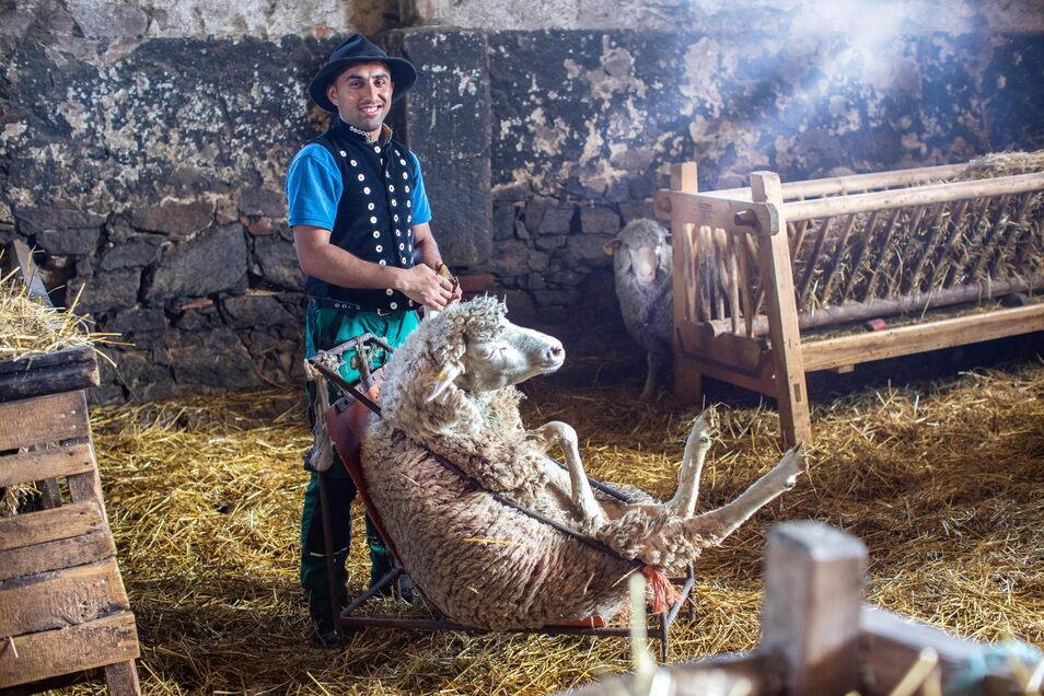 Schäferei-Lehrling Farooq Shah bei der Klauenpflege. Damit das Schaf still bleibt, wird es auf den Steiß gesetzt. Shah verließ mit 18 seine pakistanische Heimat.
