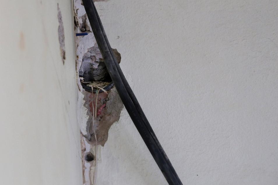Überraschend nistet ein Rotschwanz-Pärchen im Foyer - offenbar ungestört von den Bauarbeiten. Auf den Ablauf der Arbeiten haben die Vögel keine Auswirkungen, heißt es.