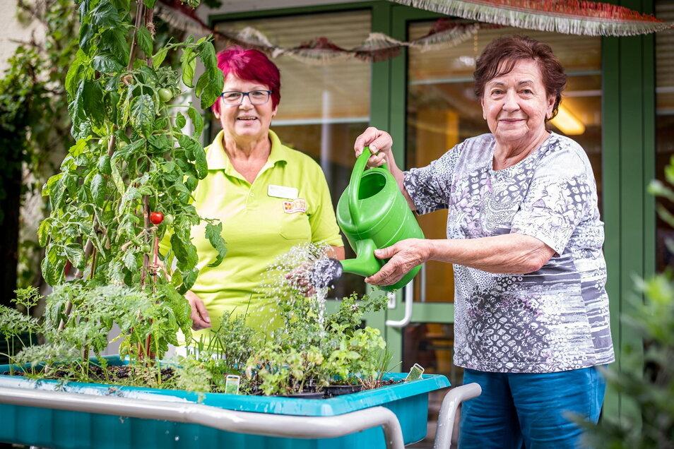 Um die Pflanzen kümmern sich die Senioren in der ASB-Tagespflege in Königsbrück selbst. Karin Fehre (l.), langjährige Betreuungskraft, hilft dabei.