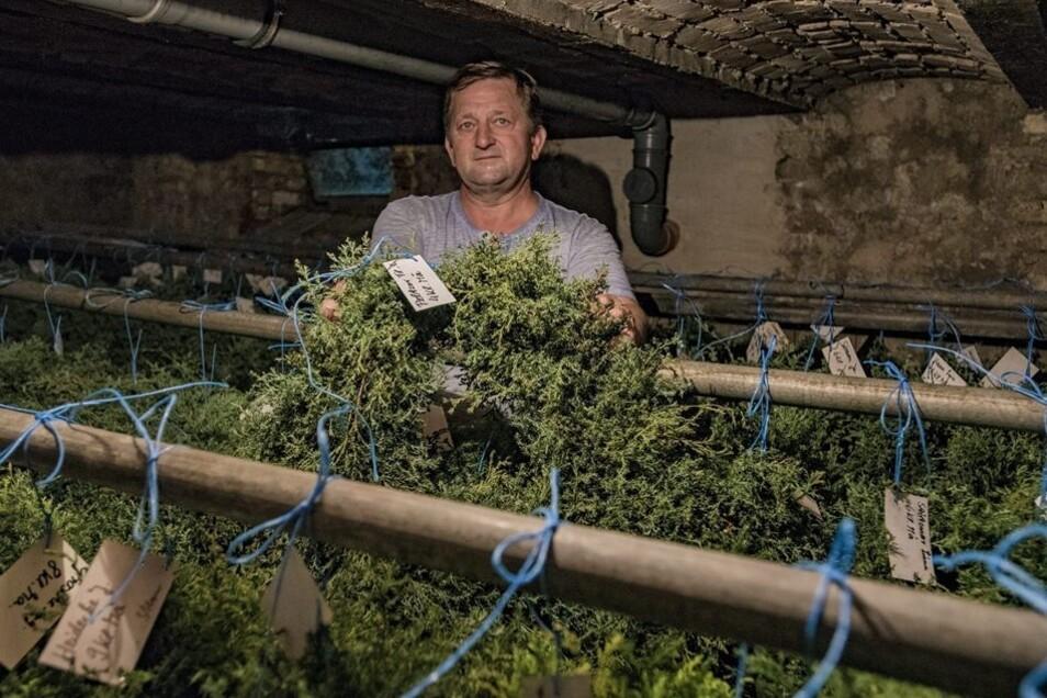 Im Keller der Gärtnerei hängen die fertig gebundenen Kränze bereits seit ein paar Tagen. Fehlen noch die Blumen. Horst Scheffler ist der Meister der Koordination.