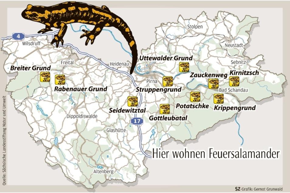 Lurchi-Land Sächsische Schweiz-Osterzgebirge: Die Grafik zeigt einige wichtige Vorkommen der bedrohten Tierart.