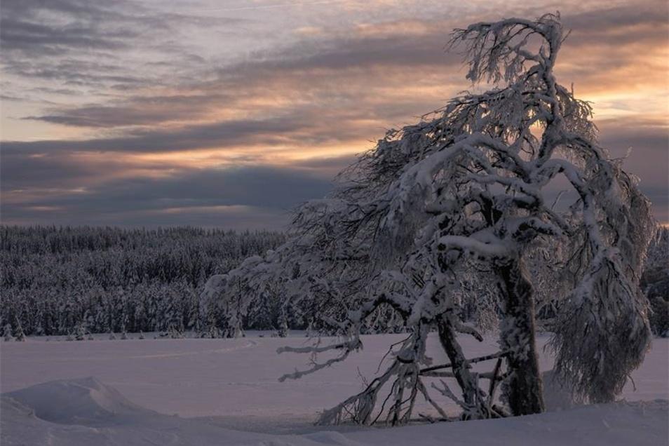 Viel Schnee, vereiste Bäume und stimmungsvolles Licht ließen das Fotografenherz von Sylvia Schröter höher schlagen. Die Dresdnerin fing dieses Bild in Zinnwald ein.