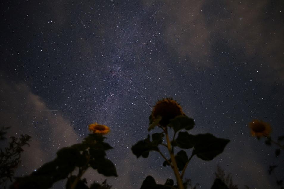 Sternschnuppen der Perseiden sind am Nachthimmel zu sehen.