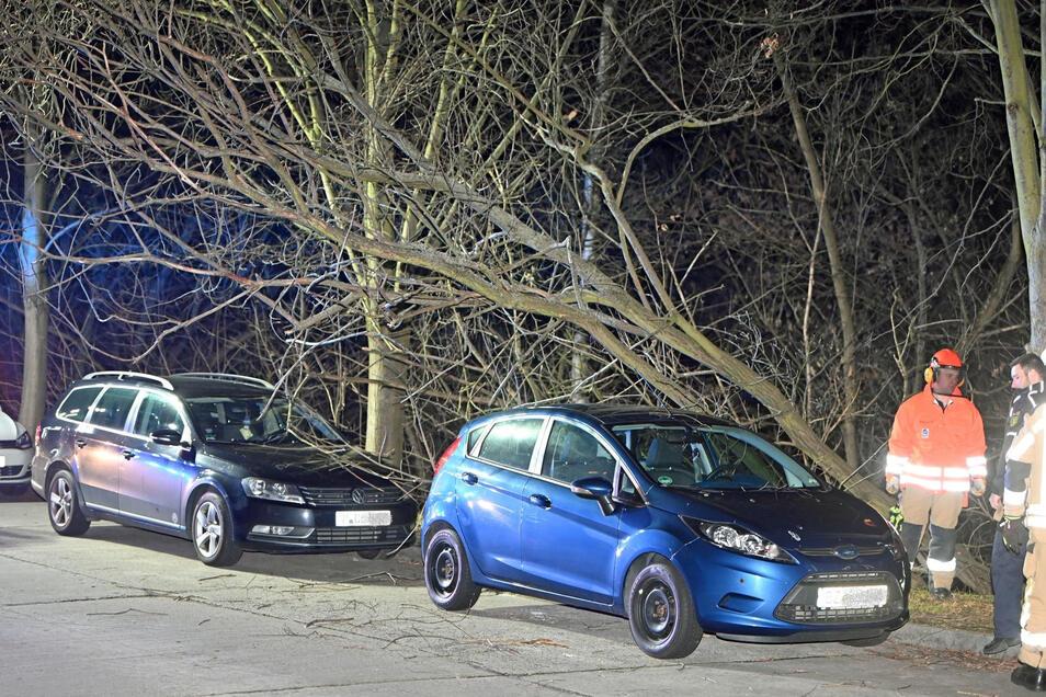 Ein VW und ein Ford wurden Sonntagabend durch einen umgestürzten Baum beschädigt.