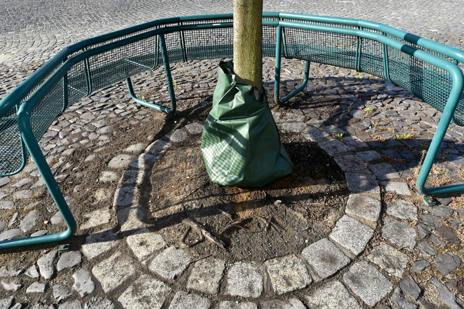 70 Liter Wasser speichert so ein Sack, wie hier an einem Baum am Zittauer Klosterplatz. Durch das langsame Durchsickern des Wassers hält er die Erde um den Baum bei diesen Bodenverhältnissen länger feucht, als mit herkömmlichen gießen.