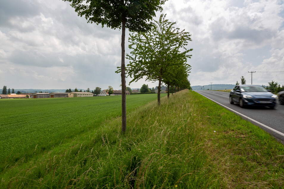 Auf diesem Grünland vor oberhalb von Kleincarsdorf soll ein neuer Stall gebaut werden.