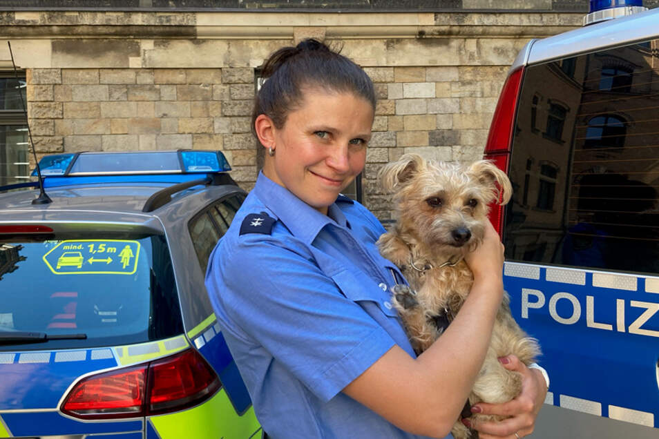 Dresdner Polizisten haben einen Findelhund aufgenommen. Nun suchen die Beamten nach dem Herrchen oder Frauchen.