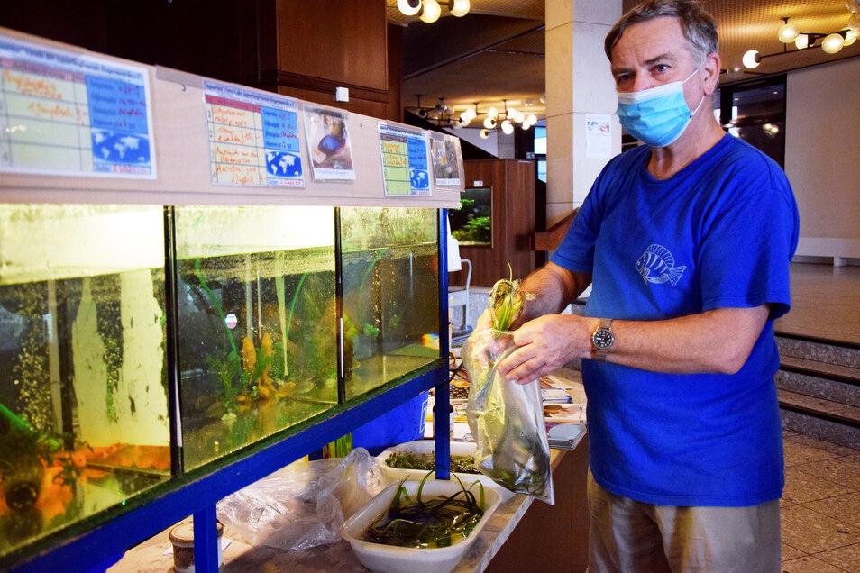 Harald Wukasch tütet Wasserpflanzen für Käufer ein. Natürlich wird das Grün in seinem Element, eben H2O, transportiert – es soll ja wohlbehalten ankommen.