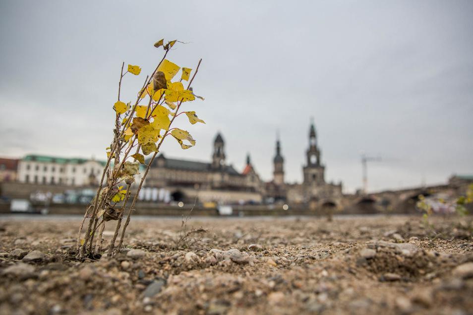Das Elbufer in Dresden war fast das gesamte Jahr über großflächig trocken.