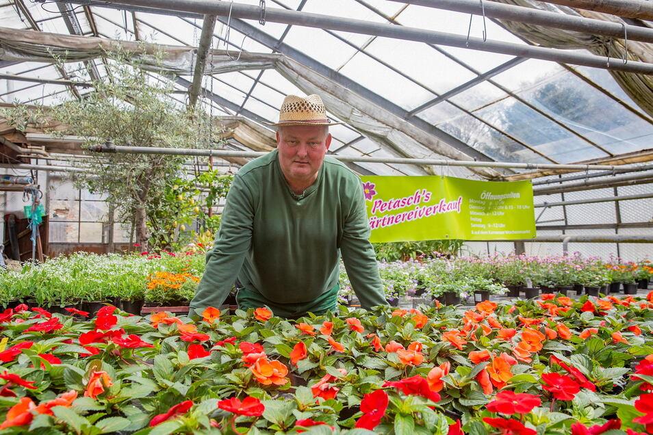Bei Heiko Petasch in Kamenz blühen die Fleißigen Lieschen und viele andere Pflanzen derzeit prächtig. Um den Absatz macht sich der Gärtner auch in Corona-Zeiten keine Sorgen.