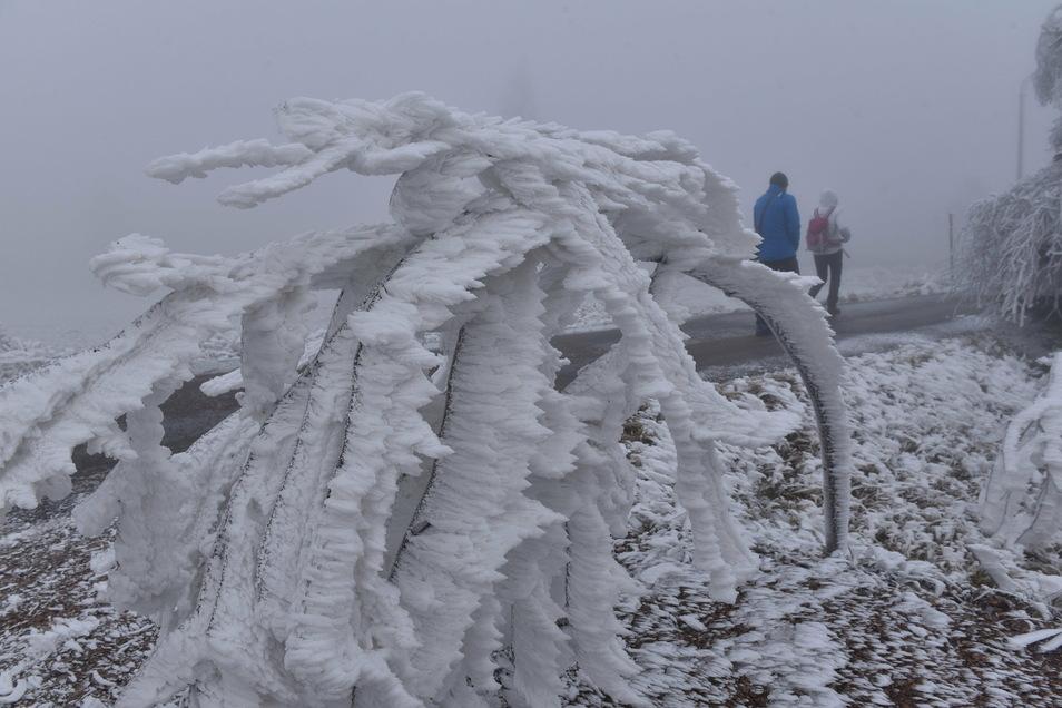 Raureif liegt schwer über Zinnwald. Während woanders die Sonne schien, gab sich der Winter im Kammgebiet des Osterzgebirges mit Frost und dickem Nebel ein Stelldichein.