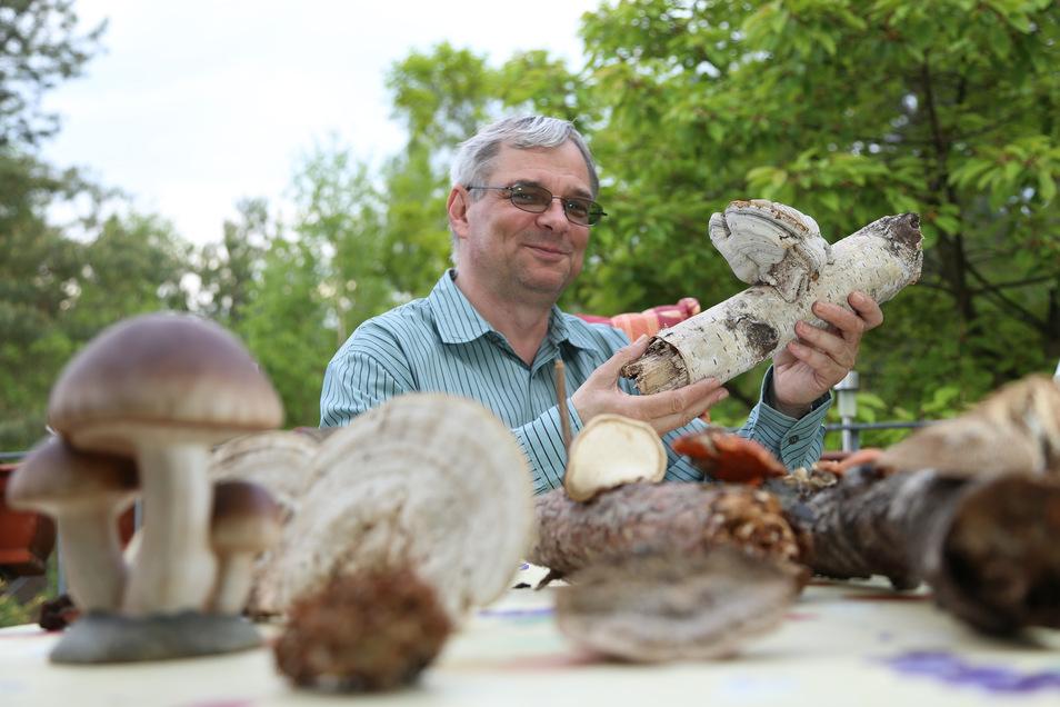 Uwe Bartholomäus aus Hähnichen freut sich über die Niederschläge der vergangenen Tage, denn das heißt: die Pilze wachsen. Bartholomäus ist der nördlichste Pilzberater im Landkreis Görlitz.