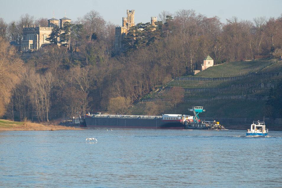 Begleitet von einem Boot des Wasser- und Schifffahrtsamtes Dresden bugsieren die Schubschiffe den Tanker durch die Kurve an den Dresdner Elbschlössern.
