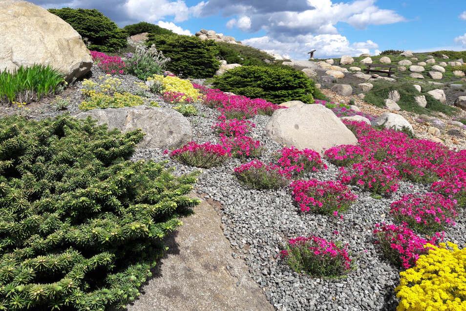 Der Steingarten im Findlingspark präsentiert sich in bunter Blütenpracht. Verpasst hat man noch nichts. Wegen des bisher kühlen Wetters ist die Vegetation etwas später dran. Nach dem Saisonstart am 15. März hatte der Park mal auf, mal zu, war mal ein