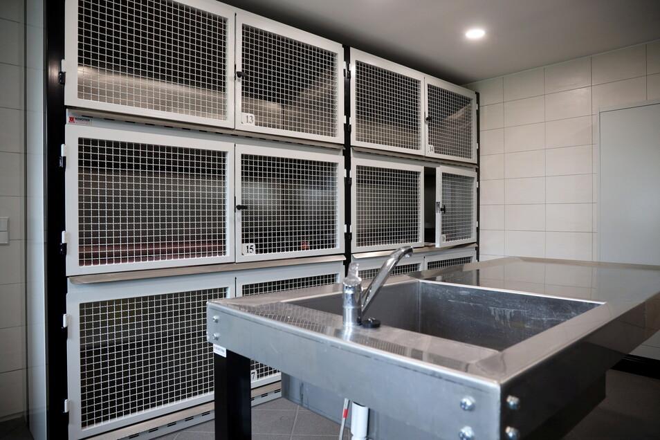 Edelstahl und größere Käfige: Rund 40.000 Euro hatte das Tierheim in die Quarantänestation insgesamt investiert. Auch Fußbodenheizung gibt es.