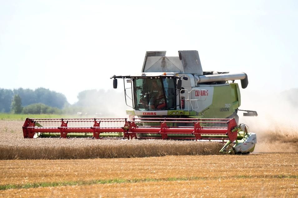 Der Regen war letztendlich fast schon zu viel für die diesjährige Ernte. Döbelns Landwirte sind dennoch zufrieden.