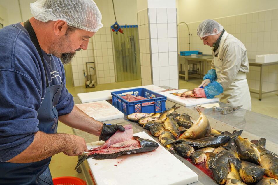 Sebastian Ruhnow (l.) und Nick Zimmer schlachten und filetieren die Karpfen bei der Firma Kirschauer Aquakulturen.
