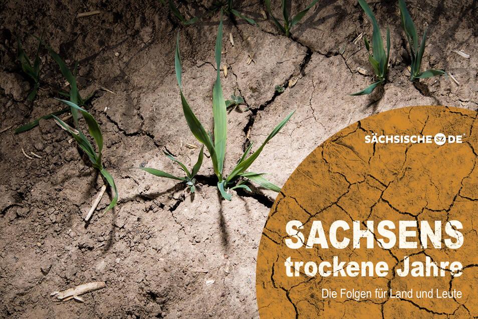 Bis 5 Liter Wasser verdunsten je Quadratmeter am Tag auf Sachsens Böden.