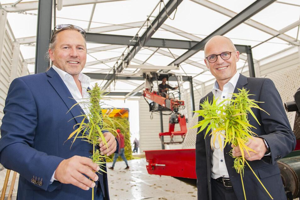 Prokurist Josef Späth (li. ) und Wayland-Geschäftsführer Morten Brandt zeigen die frische Ernte vom Industriehanf, der in Naunhof zerkleinert und getrocknet wird. Als Ölextrakt landet dieser Hanf in Shampoos oder Vitaminkapseln.