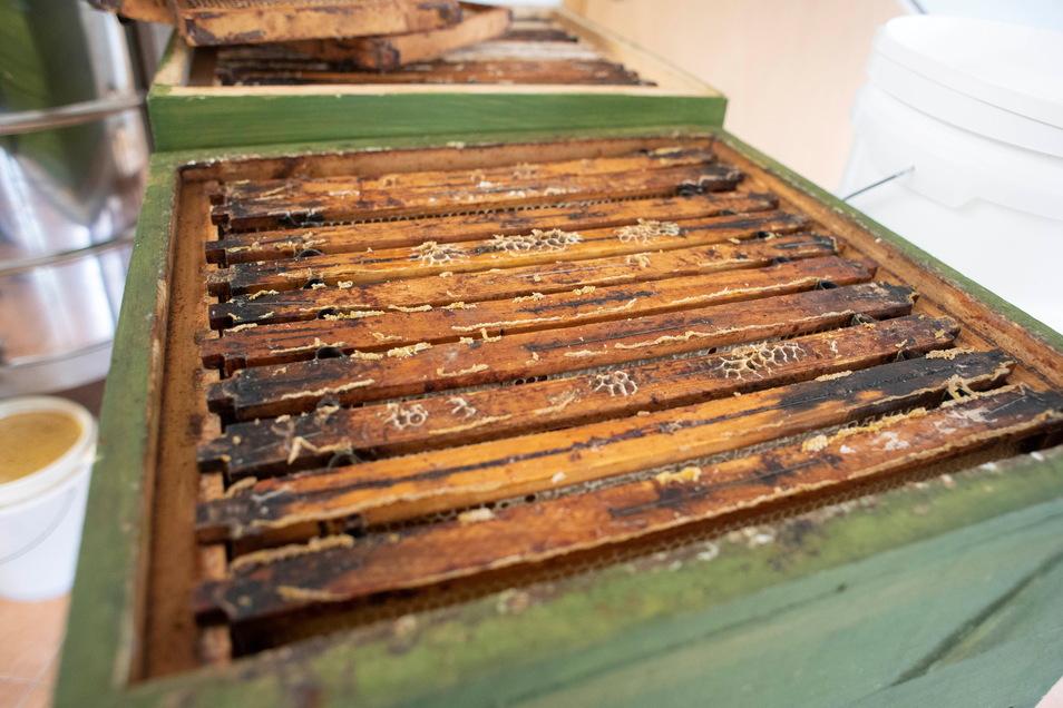 Eine Zarge mit vielen Waben. Drei Zargen ergeben bei Uwe Wendt in der Hutberg-Imkerei ein Bienenvolk.