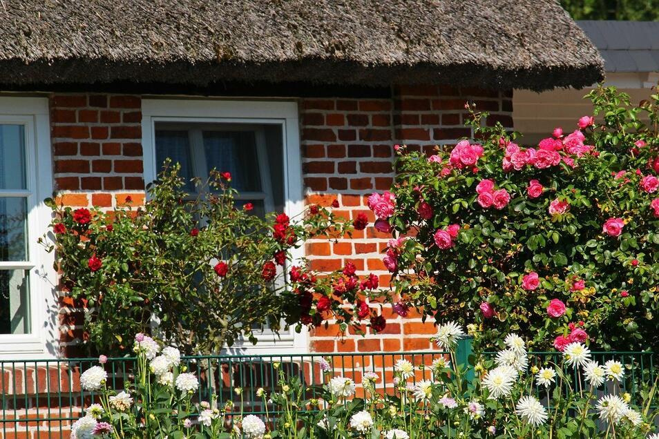 Nicht nur das Haus sollte man sorgfältig planen - auch der Vorgarten kann etwas Nachdenken gut vertragen.