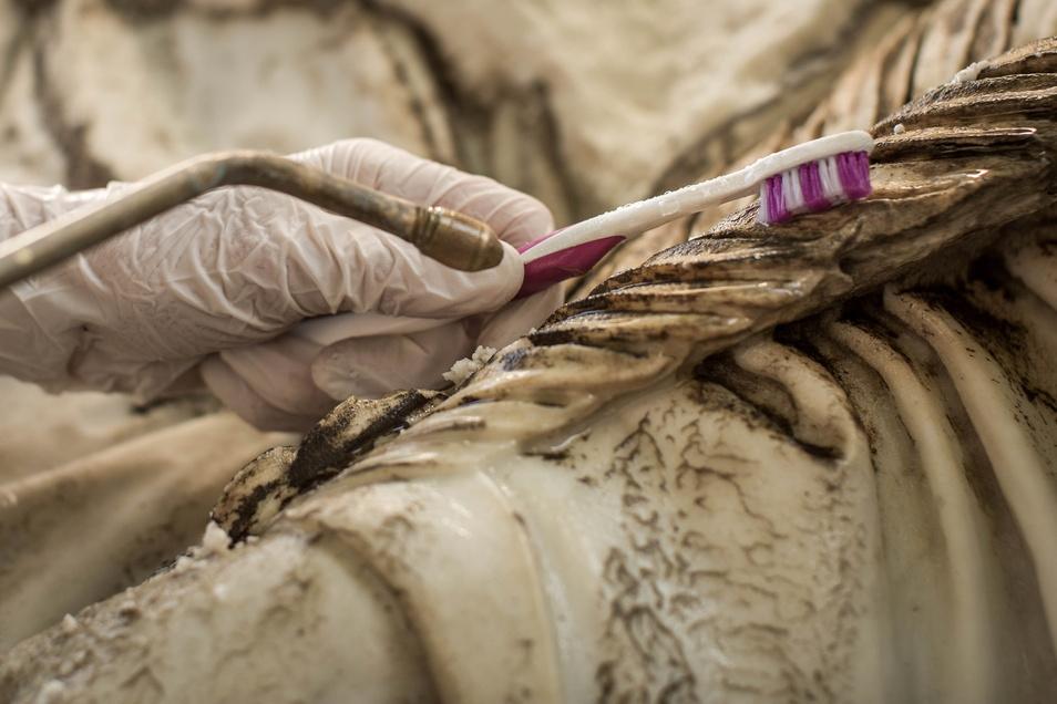 Auch ganz herkömmliche Zahnbürsten kommen zum Einsatz, wenn Restauratoren millimeterdicke Verschmutzungen von Marmoroberflächen entfernen. Dafür braucht es Zeit und Geduld.