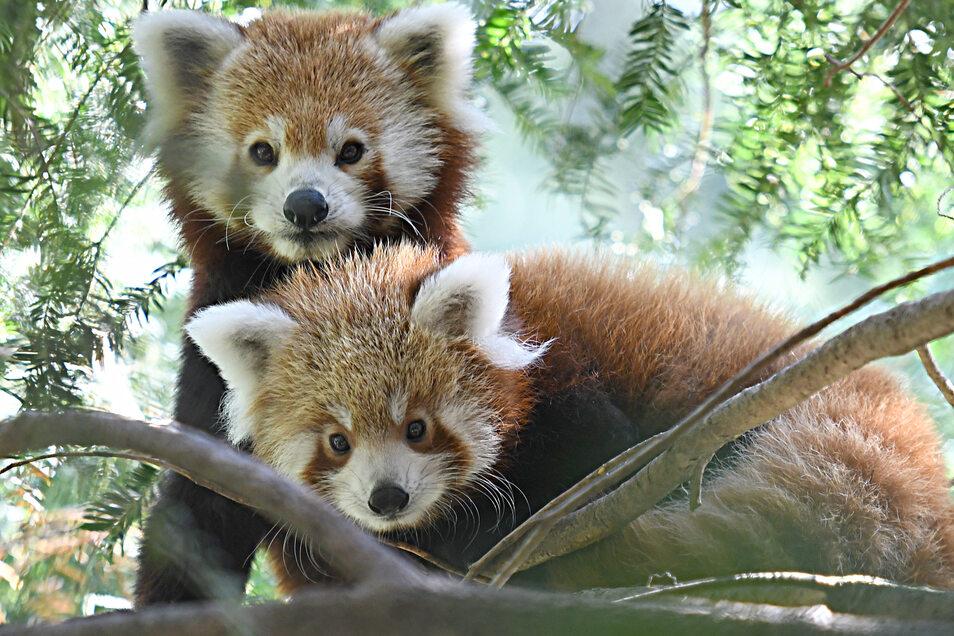 Nima mit ihrem letzten und dem 20. im Tierpark geborenen Jungtier Nishuu