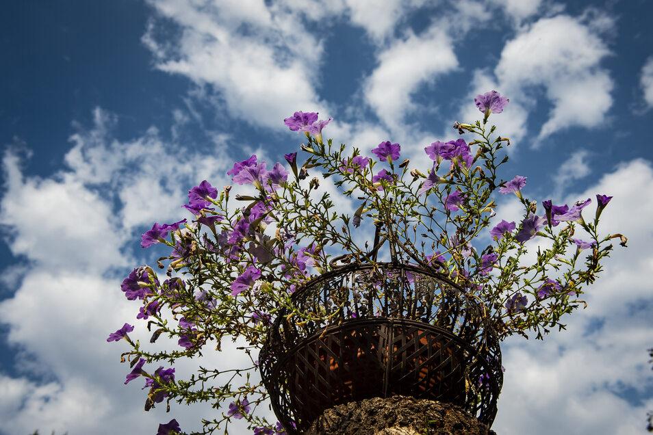 Blumenhändler haben es in der Corona-Krise schwer. Der Verein Görlitz-Pelmang will ihnen jetzt helfen.