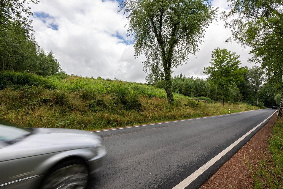 Hier an der Straße von Dipps nach Paulsdorf standen einmal hohe Bäume. Stürme und Käfer haben hier einen Kahlschlag verursacht. Jetzt muss die Stadt Dipps erst wieder Geld in den Wald stecken.