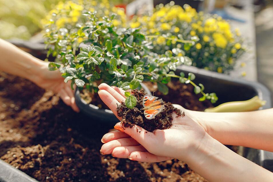 Der Frühling kommt. Garten, Terrasse und Balkon können gerade in Krisenzeiten zu Wohlfühloasen werden.