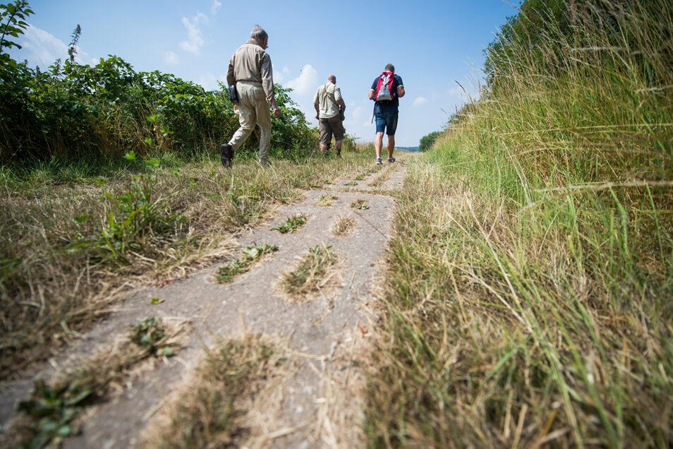 Wanderer laufen am ehemaligen innerdeutschen Grenzstreifen bei Teistungen in Thüringen entlang.