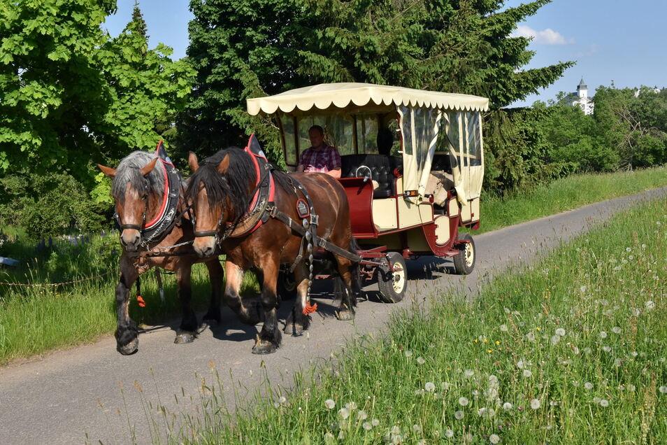 Mit ausgedehnten Trainingsfahrten, vorbei an den blühenden Bergwiesen, werden die Pferde wieder auf Ausdauer gebracht.