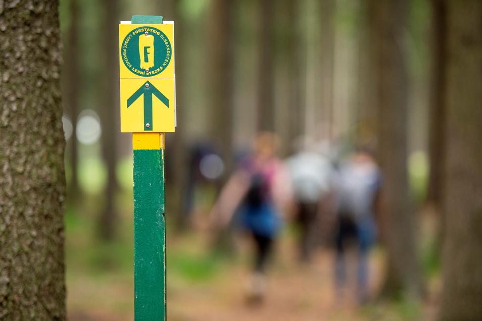 Hier geht's lang zum Forststeig. Die beliebte Trekkingroute führt im Elbsandsteingebiet über 13 Tafelberge.