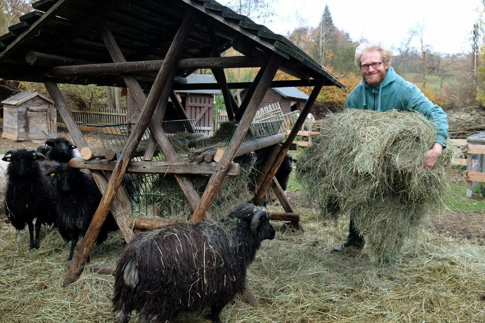 Sven Näther, der Betreiber des Elbetierparkes Hebelei, verfüttert die letzten Heureserven. Kommt kein Nachschub, muss er Huftiere schlachten.