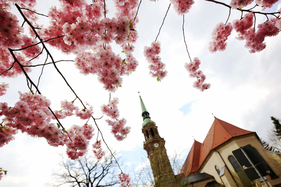 Musiker treten am Sonntag unter anderem auf dem Turm der Stadtkirche in Radeberg auf.