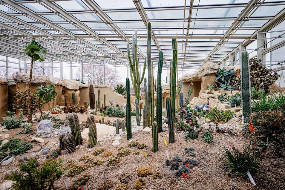 Im neuen Pflanzenschauhaus Danakil in Erfurt gibt es zwei Klimabereiche - eine karge Wüste und einen tropischen Urwald.