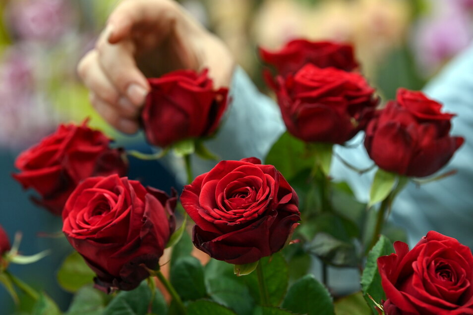 Am 8. März bekommen Frauen oft Blumen geschenkt.