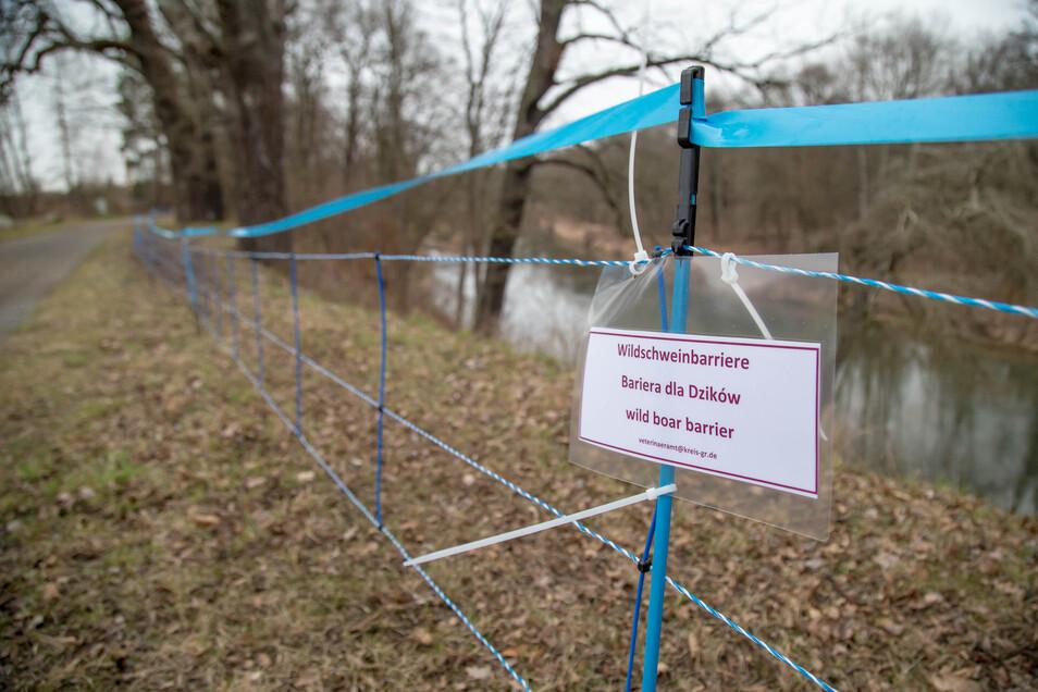 In der vergangenen Woche  wurde diese Barriere von der brandenburgischen Grenze bis zum Park Bad Muskau errichtet.