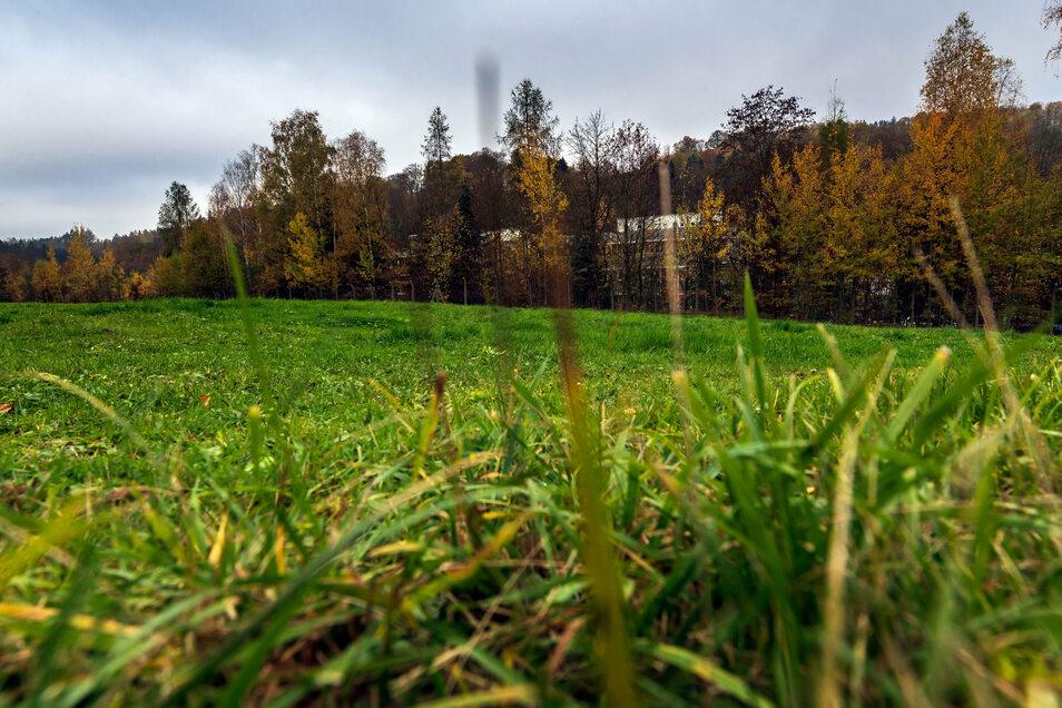 Auf dieser Weide unmittelbar südlich des Werksgeländes sollen gut 2.000 Solarmodule Platz finden.