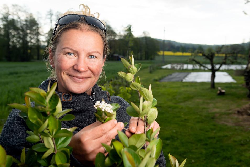 Die Blüten des Aronia-Strauches haben die kalten Nächte unbeschadet überstanden. Corina Cwolek hofft jetzt auf eine gute Obst- und Gemüseernte. Was sie auf dem Grundstück der Familie in Neukirch anbaut, verkauft sie in ihrem Laden in Schirgiswalde.