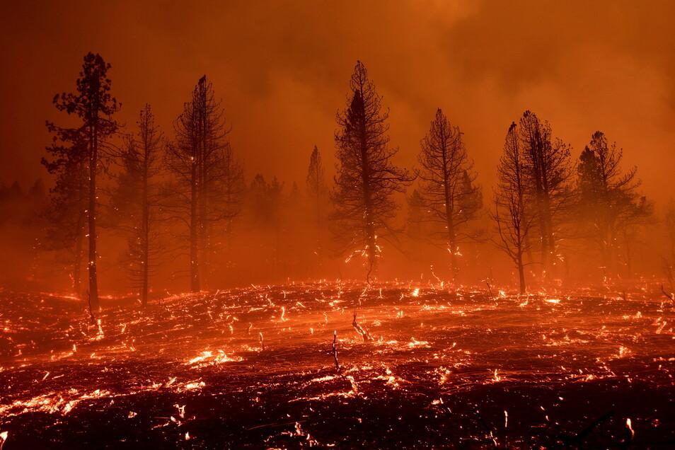 Die Waldbrände in den USA nehmen zu, auch wegen der großen Hitzewellen die die Westküste Nordamerikas in diesem Jahr mehrfach heimsuchten.