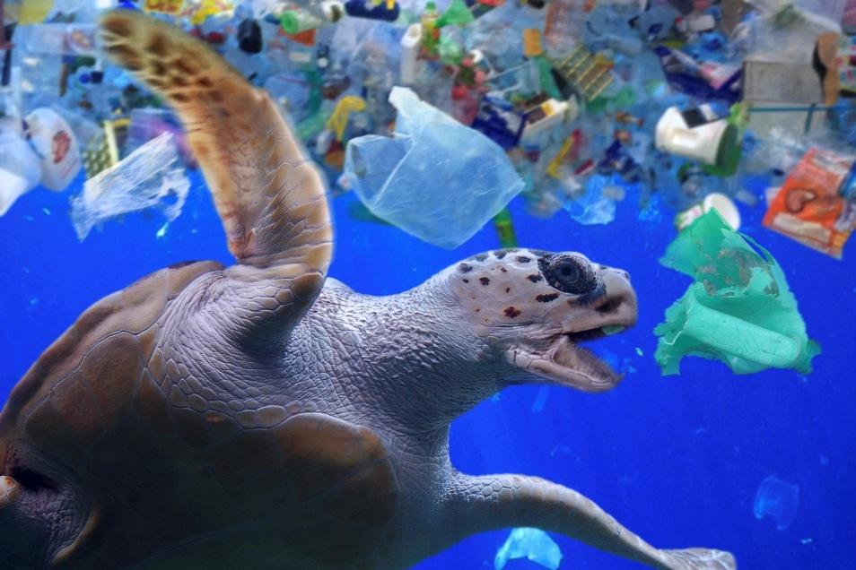 Eine Meeresschildkröte unter Plastikmüll im Indischen Ozean.