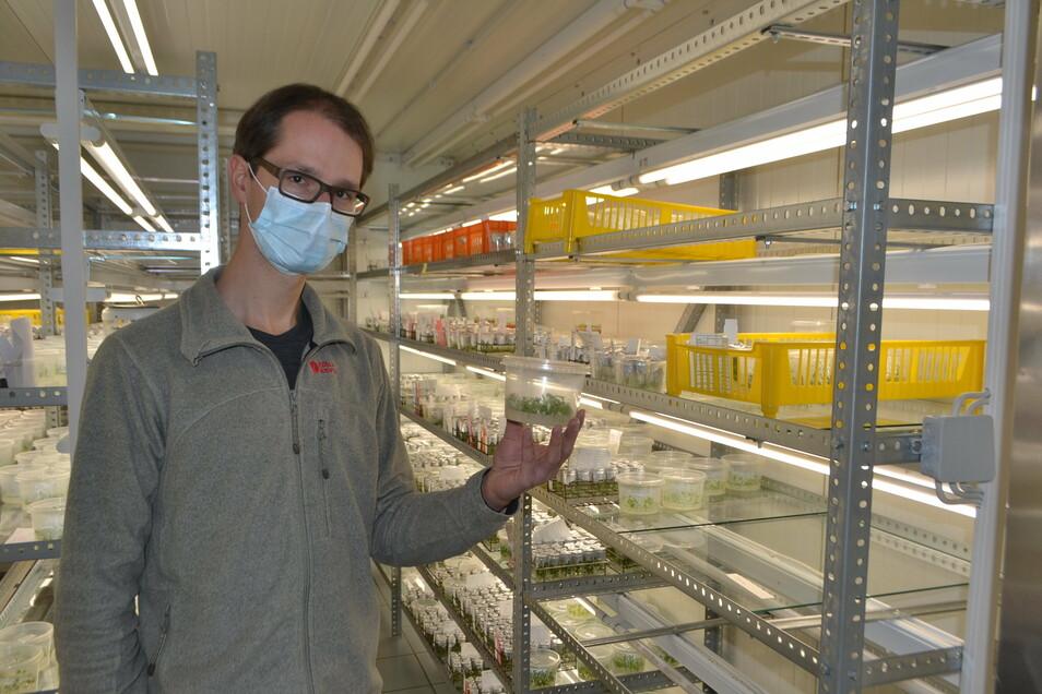 Laborleiter Dr. Dominic Eberle im Gewebekulturraum, wo das Pflanzen-Ausgangsmaterial im Depot gehalten wird.