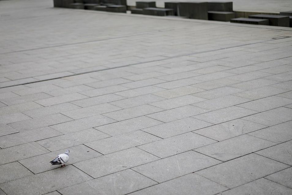 Diese Taube hat den Marienplatz mal ganz für sich.