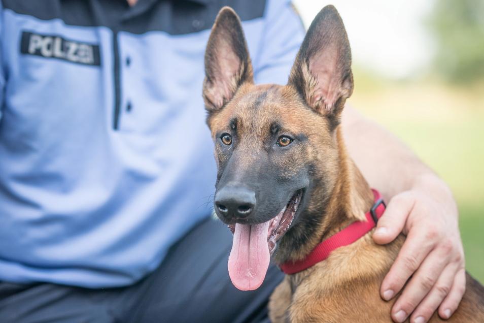 Auch Polizeihunde waren an der Suche nach Lothar S. beteiligt.