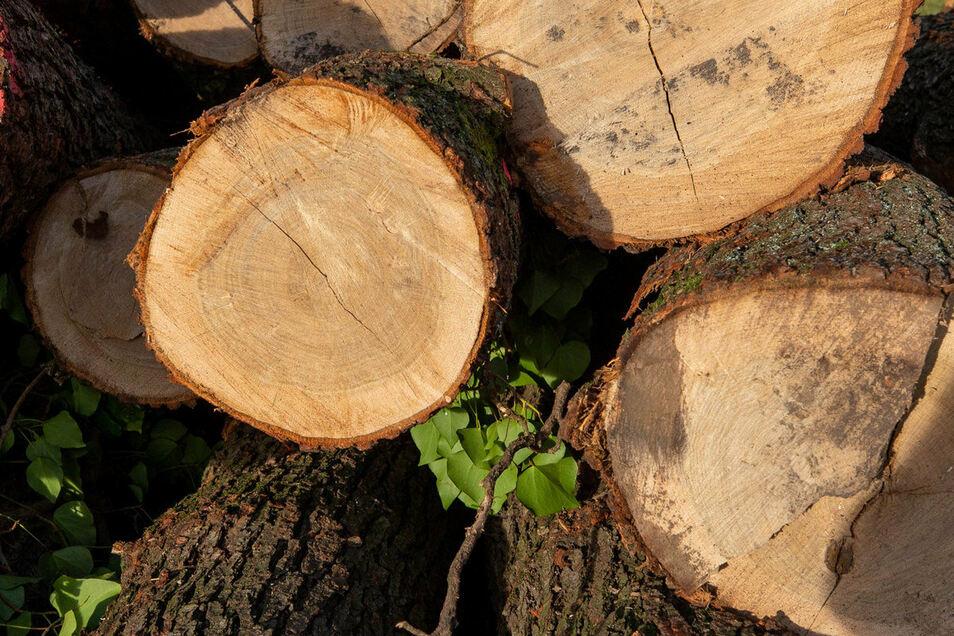 Die Einnahmen aus der Holzernte werden auf 750 Euro geschätzt.