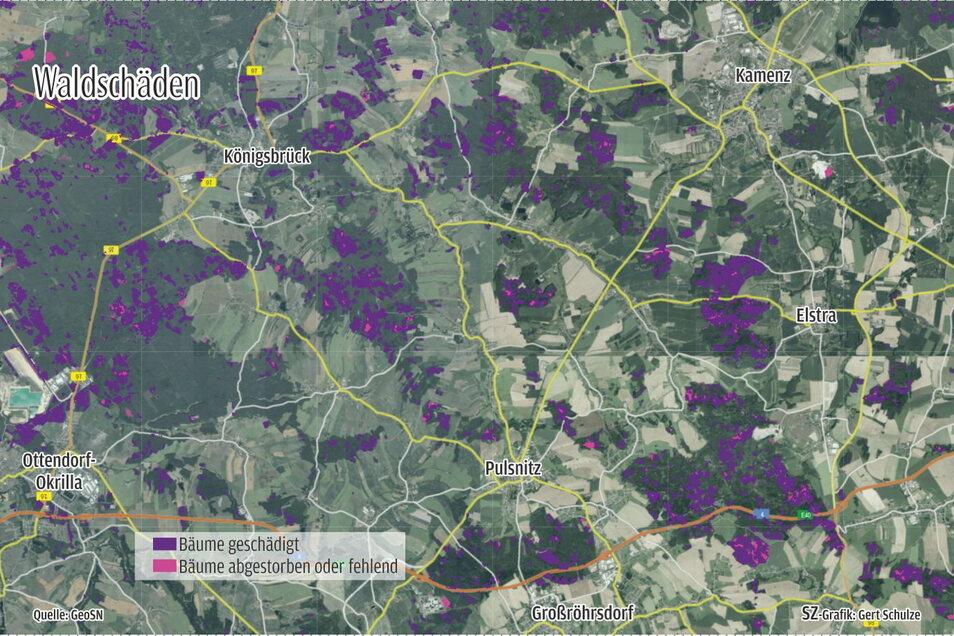 Waldschäden in der Region Kamenz.