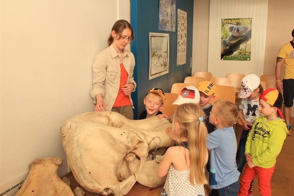 Die Kinder dürfen in das Maul eines Elefantenschädels fassen.