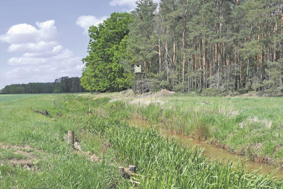 Der Abschnitt der Raklitza an den Zweibrücken bei Daubitz wurde renaturiert. Weitere Abschnitte des Flüsschens könnten bei Erfolg der Maßnahme folgen.
