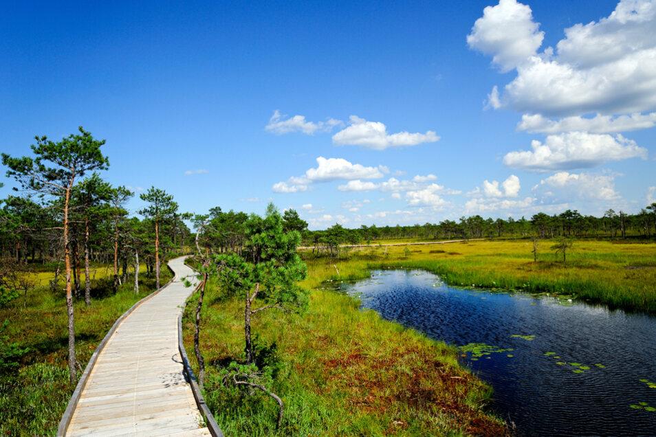 Ein nachhaltiges Naturerlebnis in einer ganz besonderen Atmosphäre bietet die Hochmoor-Landschaft in Estland.